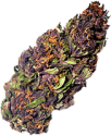 kwiat purple haze