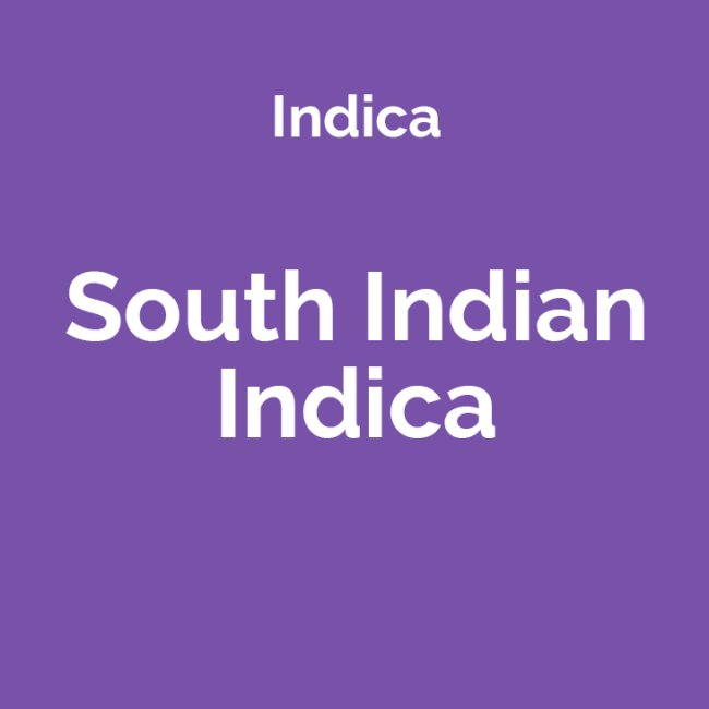 South Indian Indica