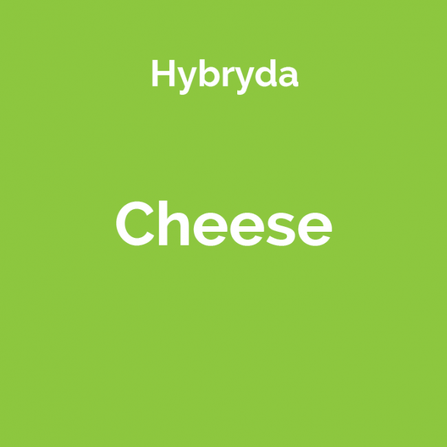 Odmiana marihuany Cheese