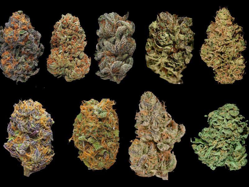 Ile jest wszystkich odmian marihuany
