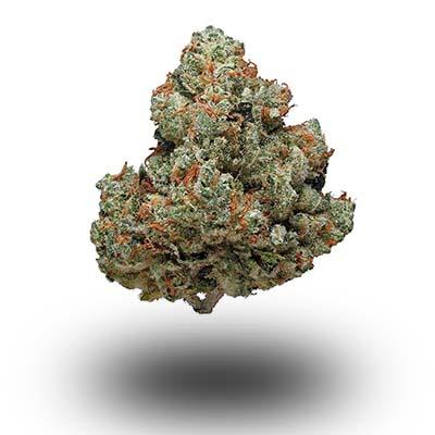 Najmocniejsza odmiana marihuany - Chemdawg