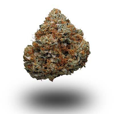 Najmocniejsza odmiana marihuany - GodFather OG