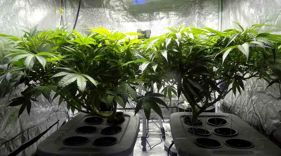 Miejsce do uprawy marihuany indoor