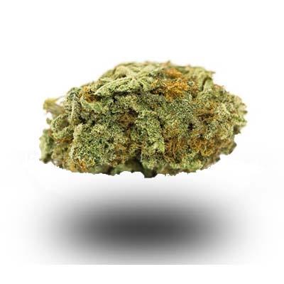 Najmocniejsza odmiana marihuany - Irish Cream