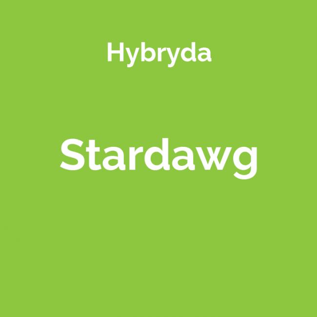 Stardawg - odmiana marihuany