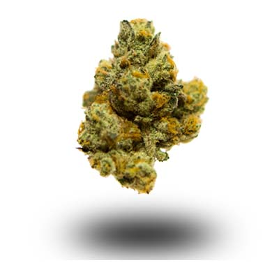 Najmocniejsza odmiana marihuany - White Tahoe Cookies