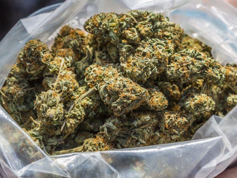 Jak rozpoznać marihuanę wysokiej jakości? Należy wziąć pod uwagę kilka czynników, takich jak wygląd, smak, zapach, wilgoć. Sprawdź jak wygląda marihuana najwyższej jakości