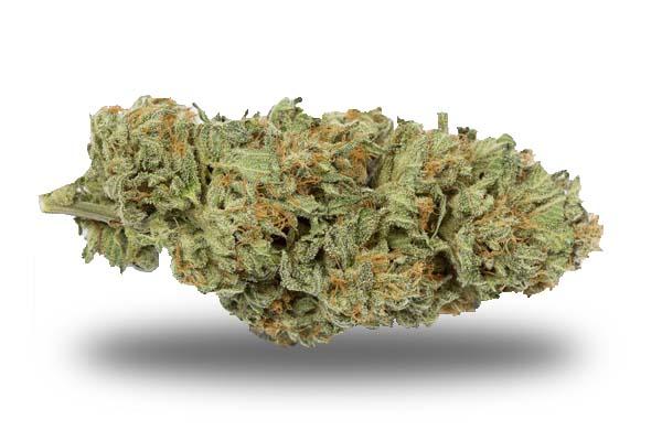 Bubba Kush odmiana i nasiona marihuany