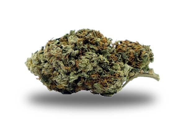 Master Kush odmiana i nasiona marihuany