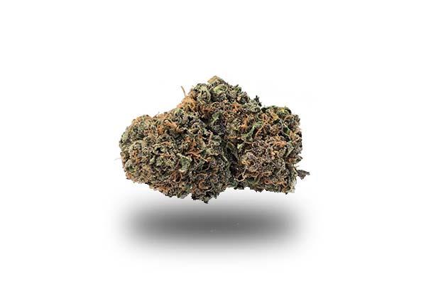 Purple Haze odmiana i nasiona marihuany