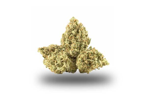Silver Haze odmiana i nasiona marihuany