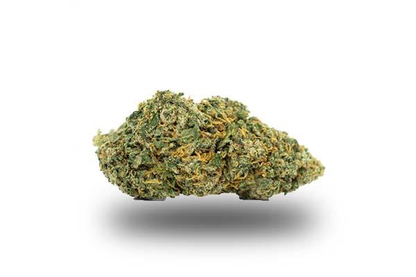 Super Silver Haze odmiana i nasiona marihuany