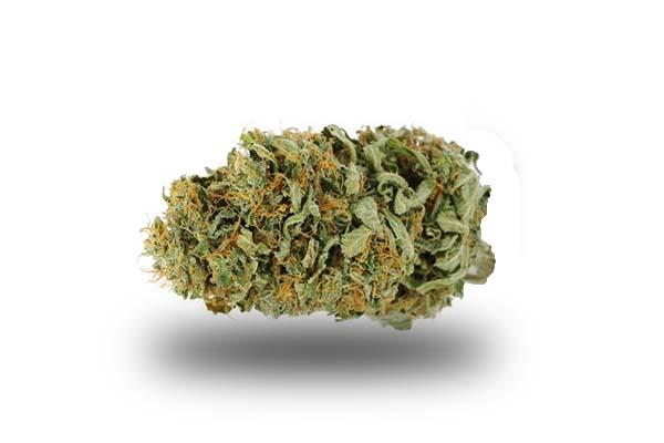 Amnesia Haze odmiana i nasiona marihuany
