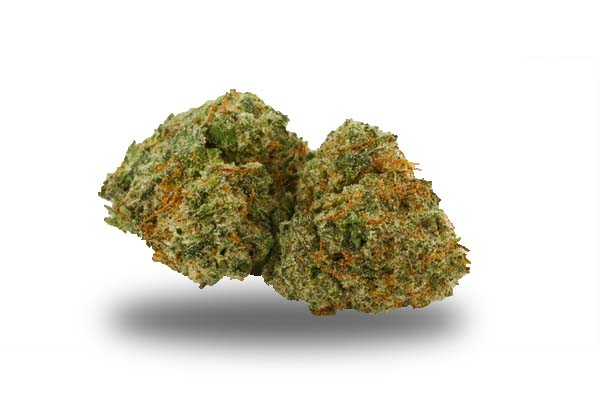 Critical Kush odmiana i nasiona marihuany