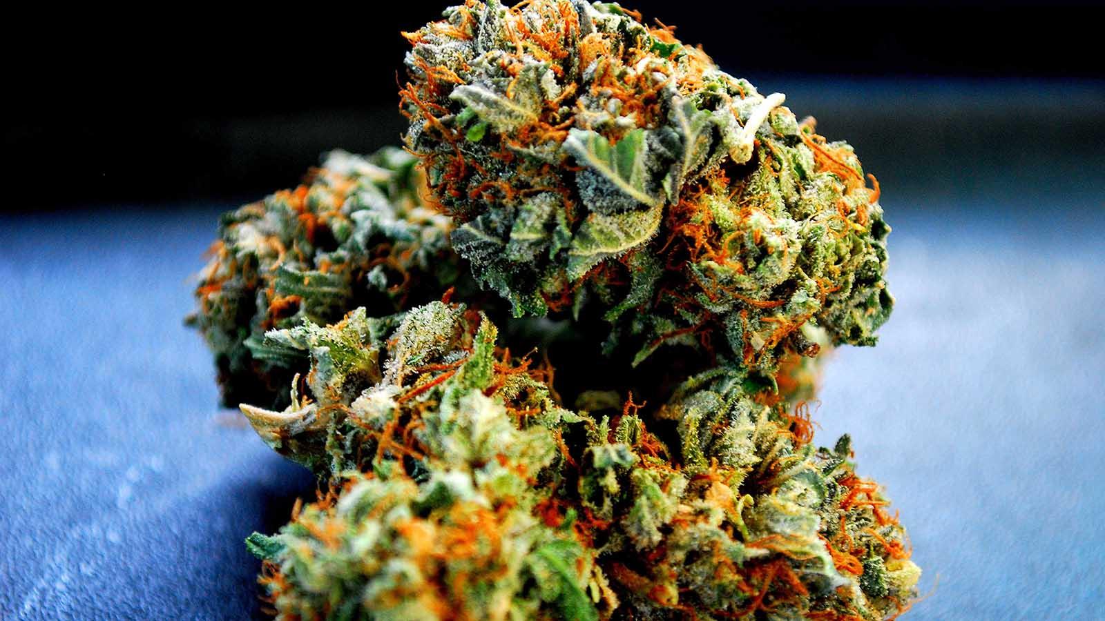 Odmiany marihuany Kush - skąd pochodzą i czym wyróżniają się odmiany kush?