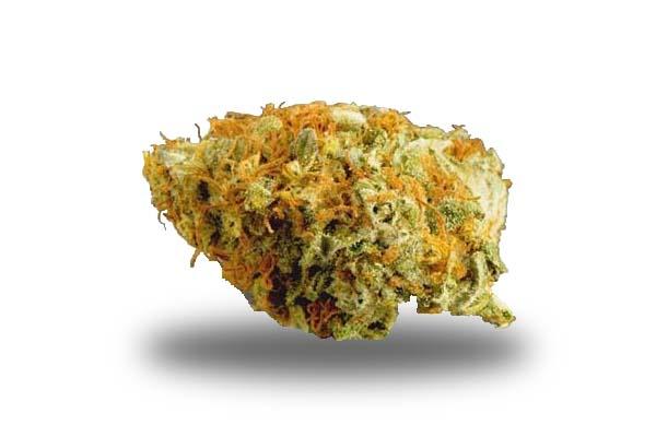 OG Kush odmiana i nasiona marihuany