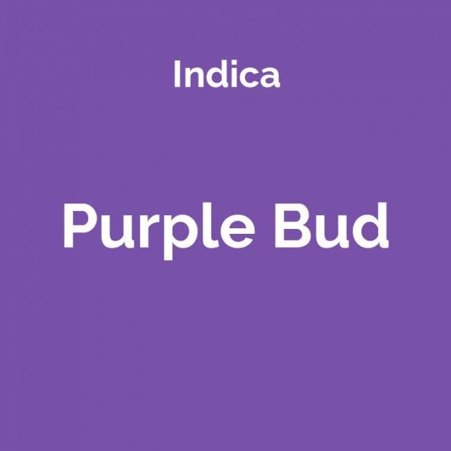 Purple Bud - odmiana i nasiona marihuany