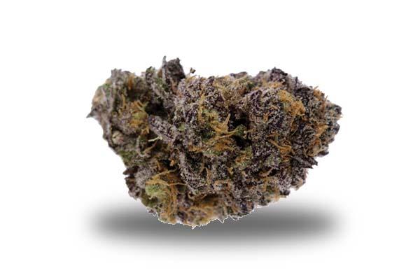 Purple Kush odmiana i nasiona marihuany