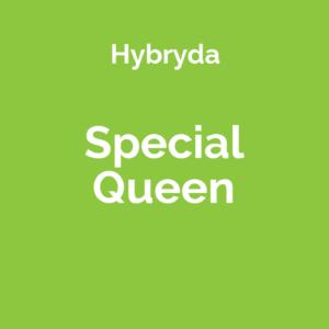 Special Queen