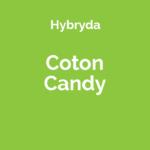Odmiana Cotton Candy Kush