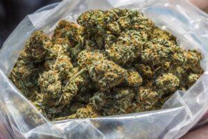 Jak rozpoznać marihuanę wysokiej jakości?