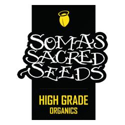 Soma Seeds nasiona marihuany