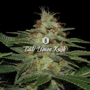 Cali Lemon Kush