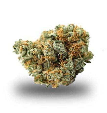 Lemon Haze - odmiana i nasiona marihuany