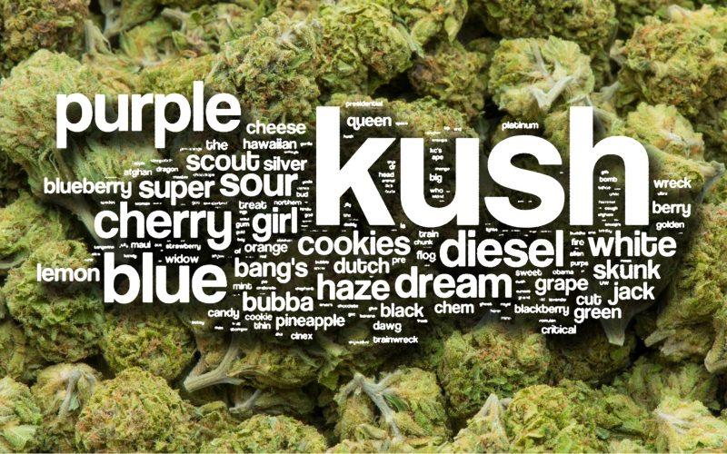 nazwy-odmian-marihuany