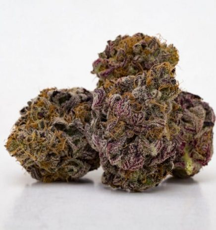 Purple Haze - odmiana marihuany o fioletowym kolorze