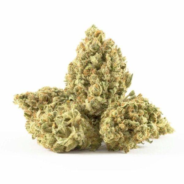 Silver Haze - odmiana marihuany sativa